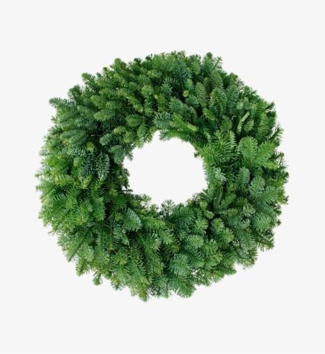 Galax Leaf