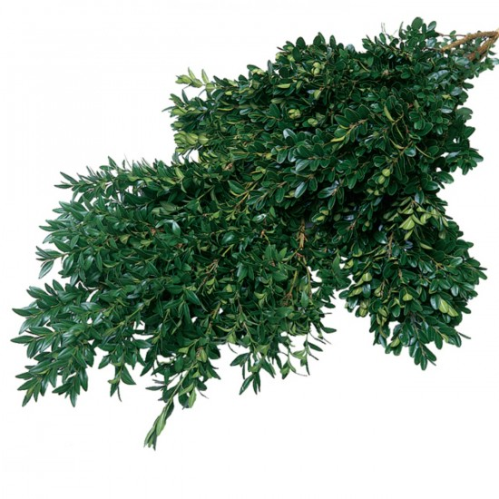 Boxwood Green