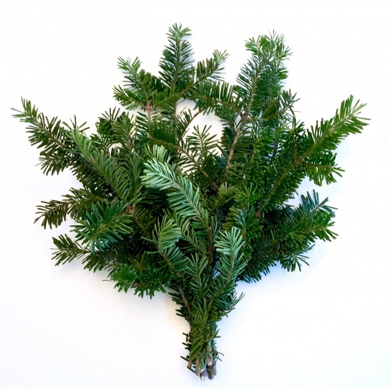 Balsam Fir Bough Tips